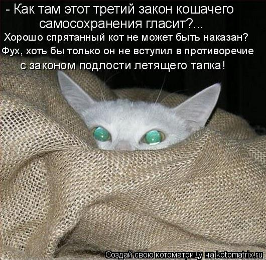 Котоматрица: - Как там этот третий закон кошачего  самосохранения гласит?...  Хорошо спрятанный кот не может быть наказан? Фух, хоть бы только он не вступил