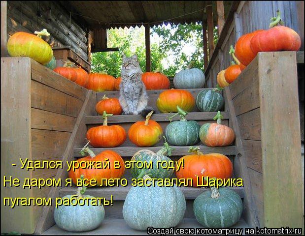 Котоматрица: - Удался урожай в этом году! Не даром я все лето заставлял Шарика пугалом работать!