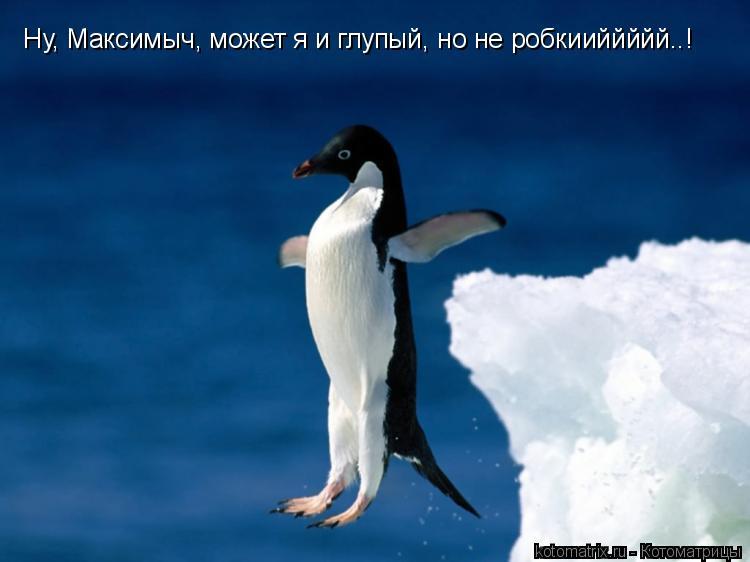 Котоматрица: Ну, Максимыч, может я и глупый, но не робкииййййй..!