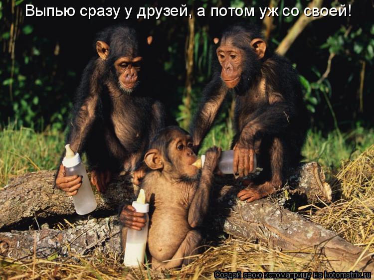 Котоматрица: Выпью сразу у друзей, а потом уж со своей!