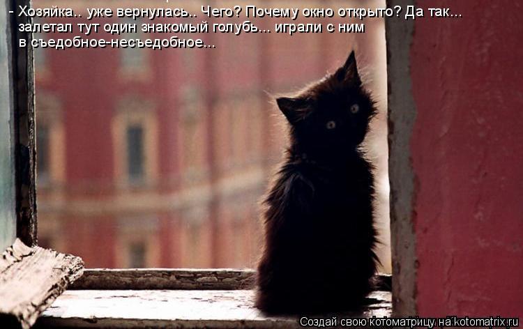 Котоматрица: - Хозяйка.. уже вернулась.. Чего? Почему окно открыто? Да так... залетал тут один знакомый голубь... играли с ним в съедобное-несъедобное...