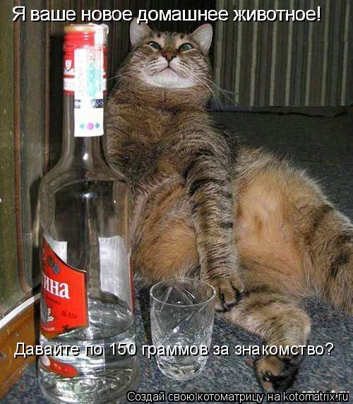 Котоматрица: Я ваше новое домашнее животное! Я ваше новое домашнее животное! Давайте по 150 граммов за знакомство?