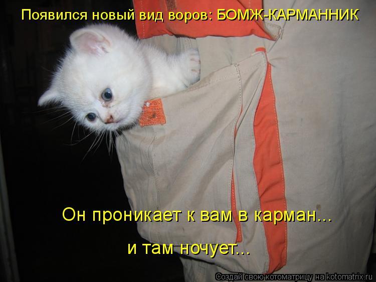 Котоматрица: Появился новый вид воров: БОМЖ-КАРМАННИК Он проникает к вам в карман...  и там ночует...