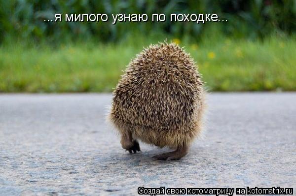 Котоматрица: ...я милого узнаю по походке...
