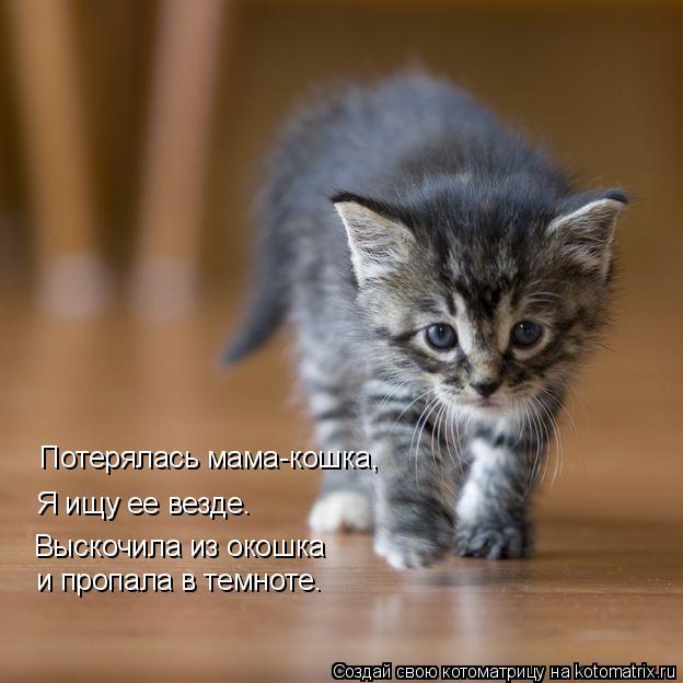 Котоматрица: Потерялась мама-кошка, Я ищу ее везде. Выскочила из окошка и пропала в темноте.