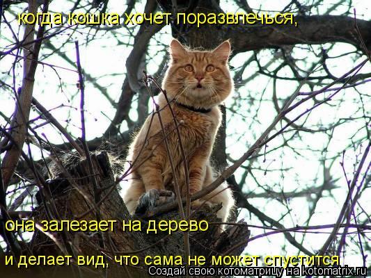 Котоматрица: когда кошка хочет поразвлечься, она залезает на дерево и делает вид, что сама не может спустится