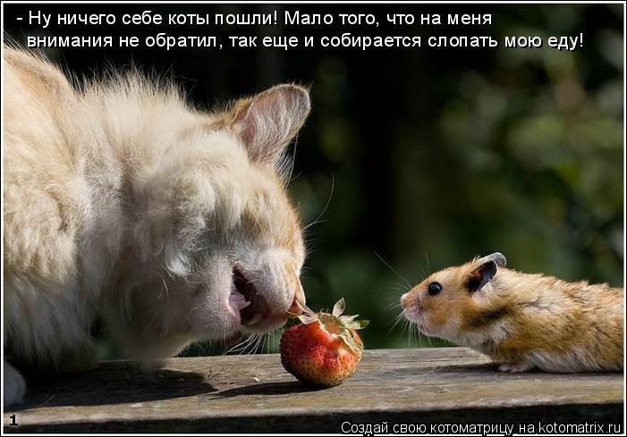 Котоматрица: - Ну ничего себе коты пошли! Мало того, что на меня внимания не обратил, так еще и собирается слопать мою еду!