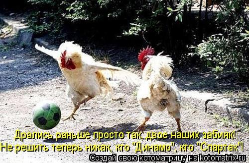 """Котоматрица: Не решить теперь никак, кто """"Динамо"""", кто """"Спартак""""! Дрались раньше просто так, двое наших забияк!"""