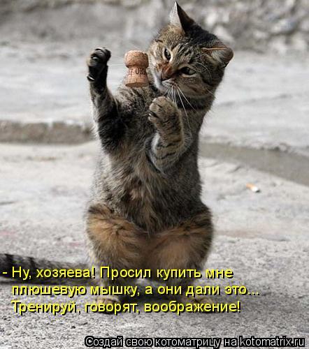 Котоматрица: - Ну, хозяева! Просил купить мне  плюшевую мышку, а они дали это... Тренируй, говорят, воображение!