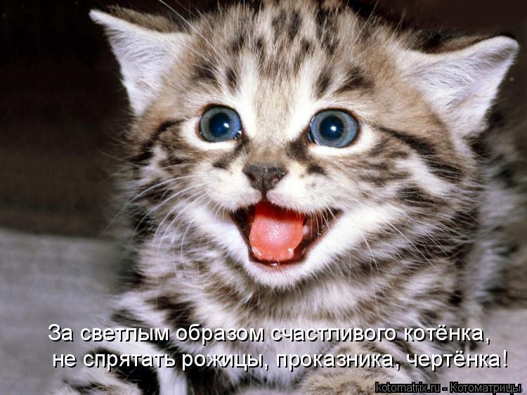 Котоматрица: За светлым образом счастливого котёнка, не спрятать рожицы, проказника, чертёнка!