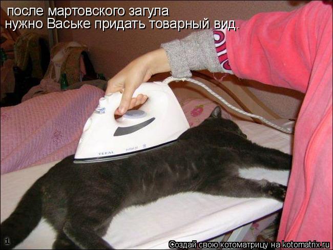 Котоматрица: после мартовского загула нужно Ваське придать товарный вид.