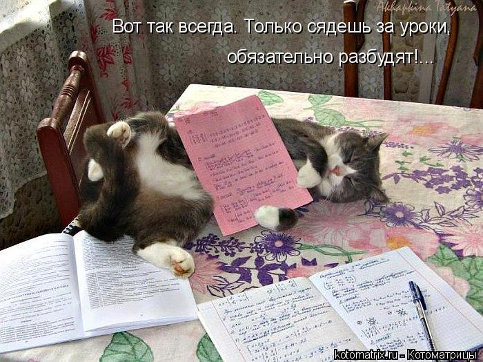 Котоматрица: Вот так всегда. Только сядешь за уроки, обязательно разбудят!...