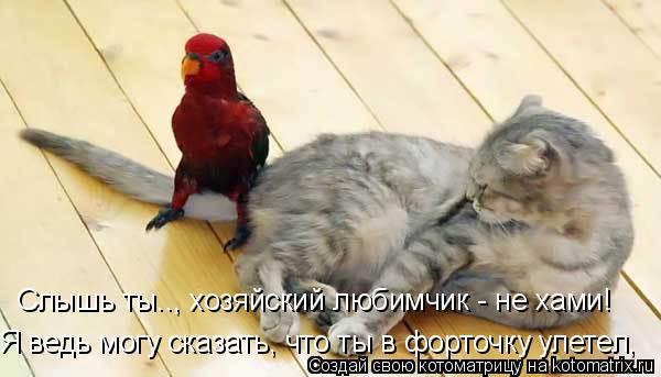 Котоматрица: Я ведь могу сказать, что ты в форточку улетел, Слышь ты.., хозяйский любимчик - не хами!