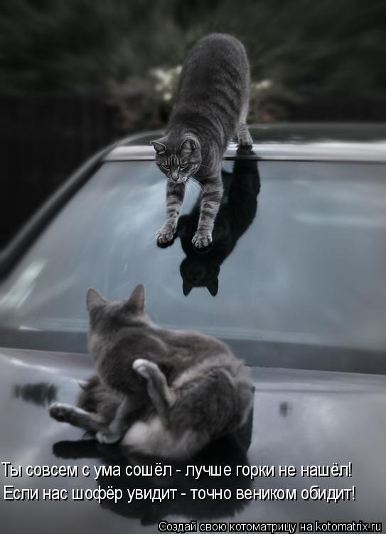 Котоматрица: Ты совсем с ума сошёл - лучше горки не нашёл! Если нас шофёр увидит - точно веником обидит!