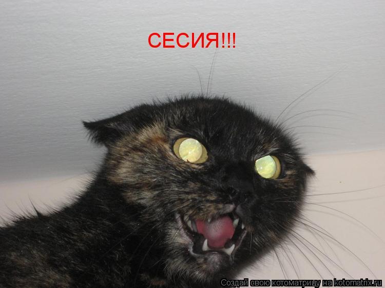 Котоматрица: СЕСИЯ!!!