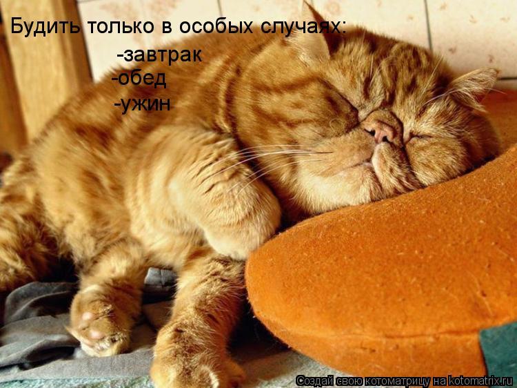 Котоматрица: Будить только в особых случаях: -завтрак -обед -ужин