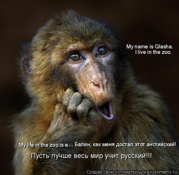 Котоматрица: My name is Glasha. I live in the zoo. My life in the zoo is a ... Балин, как меня достал этот английский! Пусть лучше весь мир учит русский!!!