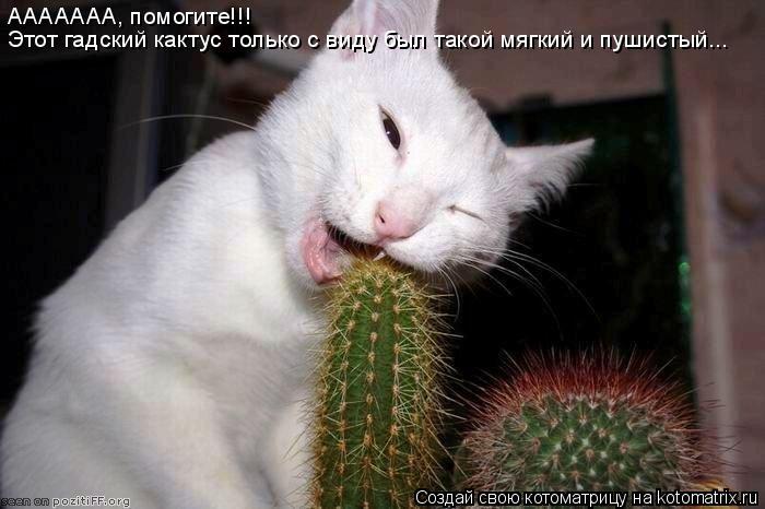 Котоматрица: ААААААА, помогите!!! Этот гадский кактус только с виду был такой мягкий и пушистый...
