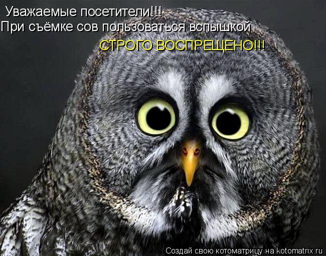 Котоматрица: Уважаемые посетители!!! При съёмке сов пользоваться вспышкой СТРОГО ВОСПРЕЩЕНО!!!