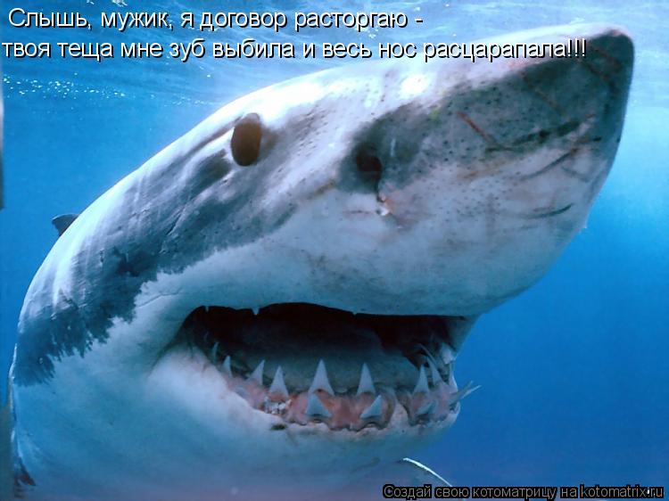 Котоматрица: Cлышь, мужик, я договор расторгаю - твоя теща мне зуб выбила и весь нос расцарапала!!!