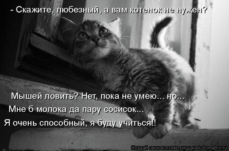 Котоматрица: - Скажите, любезный, а вам котенок не нужен? Мышей ловить? Нет, пока не умею... но...     Мне б молока да пару сосисок...   Я очень способный, я буду