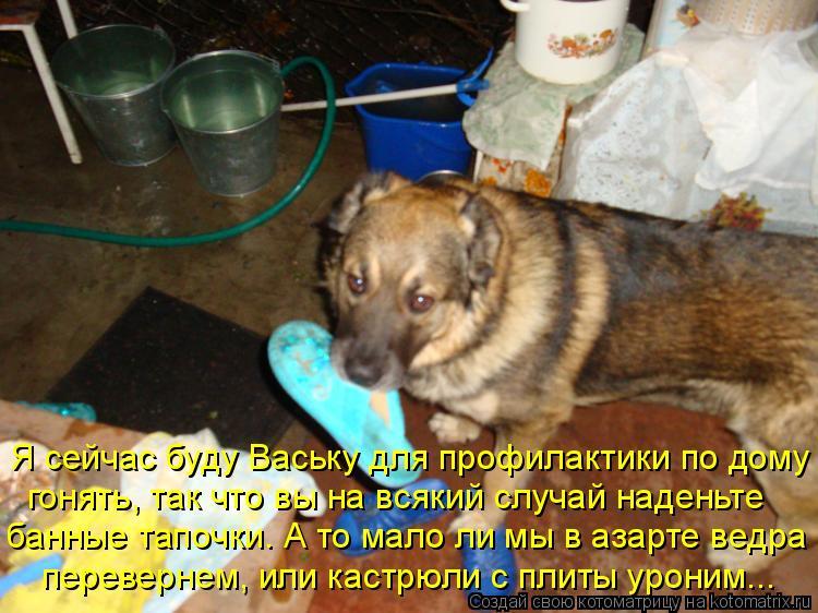 Котоматрица: Я сейчас буду Ваську для профилактики по дому  гонять, так что вы на всякий случай наденьте  банные тапочки. А то мало ли мы в азарте ведра  пе