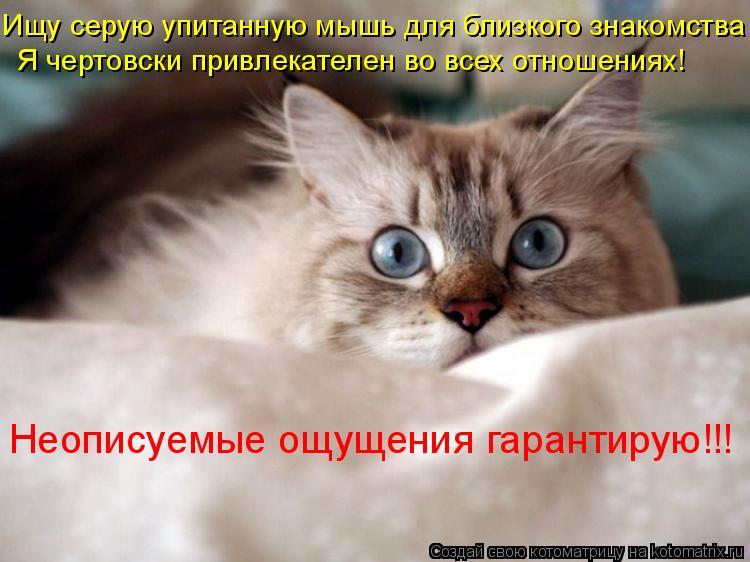 Котоматрица: Ищу серую упитанную мышь для близкого знакомства Я чертовcки привлекателен во всех отношениях! Неописуемые ощущения гарантирую!!!