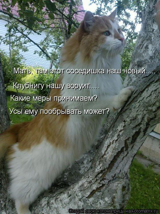 Котоматрица: Мать, там этот соседишка наш новый..... Клубнигу нашу воруит..... Какие меры принимаем? Усы ему пообрывать может?