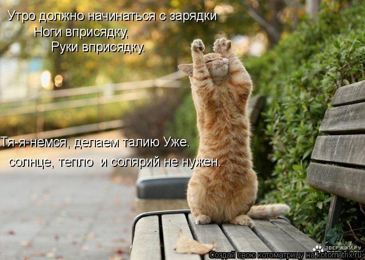 Котоматрица: Утро должно начинаться с зарядки Ноги вприсядку,  Руки вприсядку. Тя-я-немся, делаем талию Уже. солнце, тепло  и солярий не нужен.