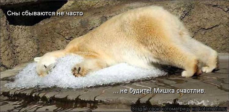 Котоматрица: Сны сбываются не часто ... не будите! Мишка счастлив.