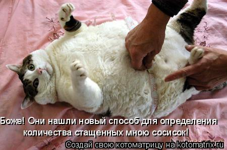 """Поzzитивные фото """"кошачьих"""")))"""