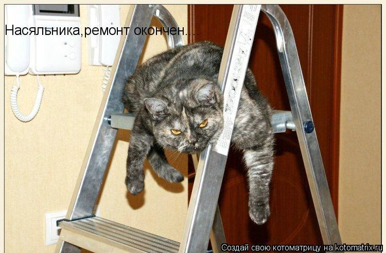Котоматрица: Насяльника,ремонт окончен....