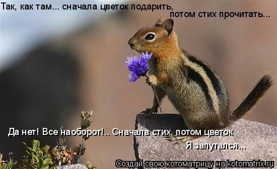 Котоматрица: Так, как там... сначала цветок подарить, потом стих прочитать... Да нет! Все наоборот!.. Сначала стих, потом цветок Я запутался...