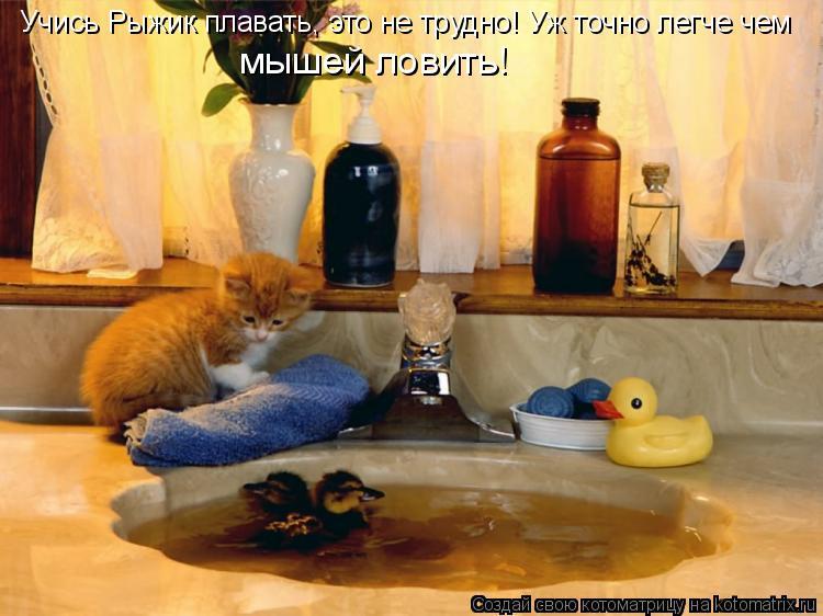 Котоматрица: мышей ловить! Учись Рыжик плавать, это не трудно! Уж точно легче чем