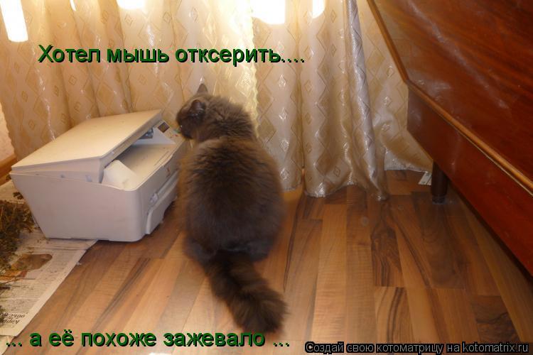 Котоматрица: Хотел мышь отксерить.... ... а её похоже зажевало ...