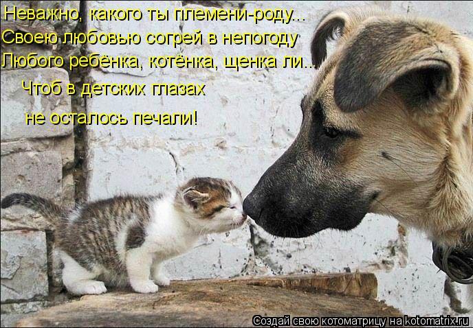 Котоматрица: Неважно, какого ты племени-роду... Своею любовью согрей в непогоду Любого ребёнка, котёнка, щенка ли... Чтоб в детских глазах  не осталось печа