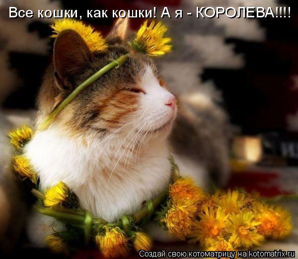 Котоматрица: Все кошки, как кошки! А я - КОРОЛЕВА!!!!