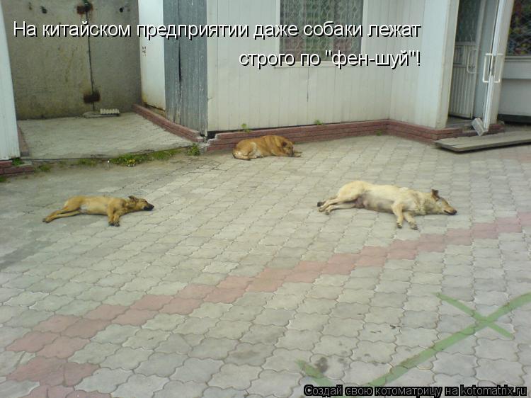 """Котоматрица: На китайском предприятии даже собаки лежат  строго по """"фен-шуй""""!"""