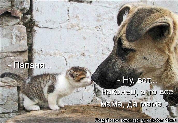 Котоматрица: - Папаня... - Ну, вот... наконец, а то все мама, да мама...