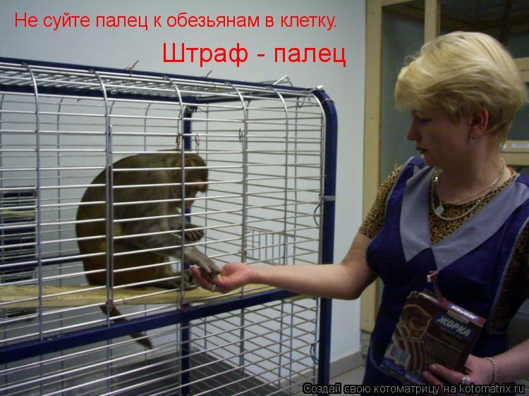 Котоматрица: Не суйте палец к обезьянам в клетку.  Штраф - палец
