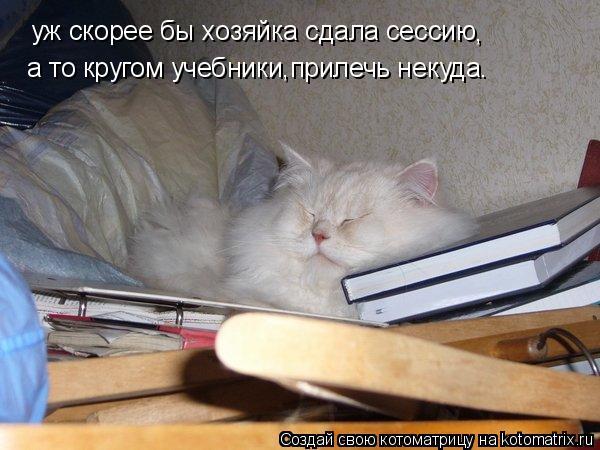 Котоматрица: уж скорее бы хозяйка сдала сессию  а то кругом учебники,прилечь некуда. ,