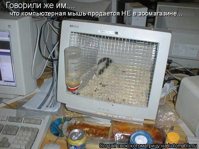 Котоматрица: Говорили же им.... что компьютерная мышь продается НЕ в зоомагазине...