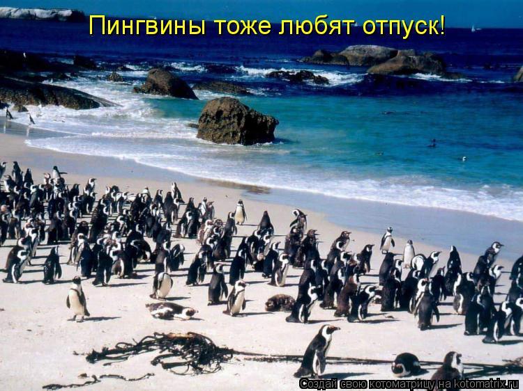 Котоматрица: Пингвины тоже любят отпуск!