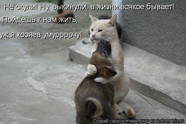 Котоматрица: Не скули! Ну, выкинули, в жизни всякое бывает! Пойдешь к нам жить, уж я хозяев умуррррчу!