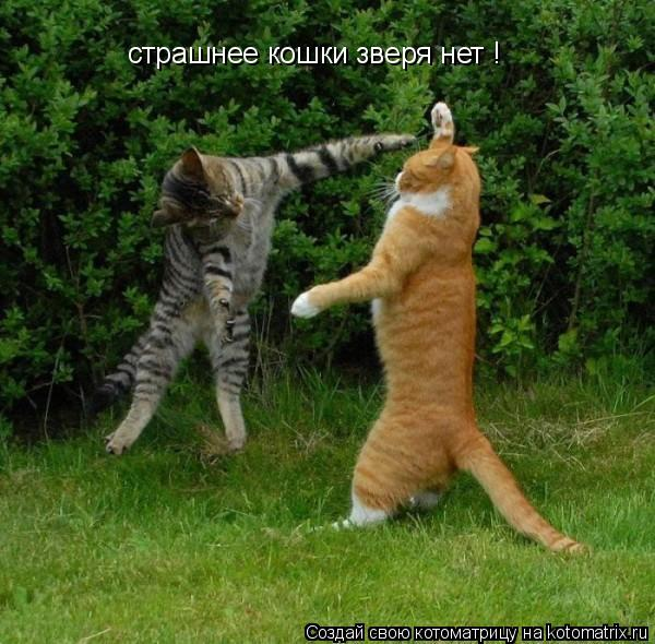 Котоматрица: страшнее кошки зверя нет !
