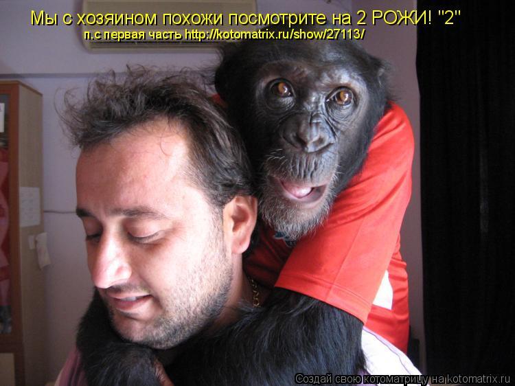"""Котоматрица: Мы с хозяином похожи посмотрите на 2 РОЖИ! """"2"""" п.с первая часть http://kotomatrix.ru/show/27113/"""