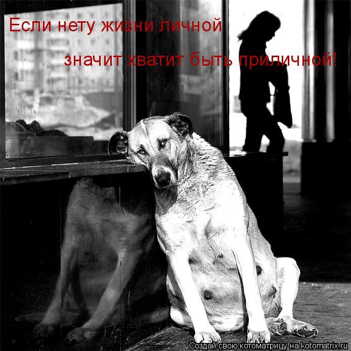 Котоматрица: Если нету жизни личной значит хватит быть приличной!