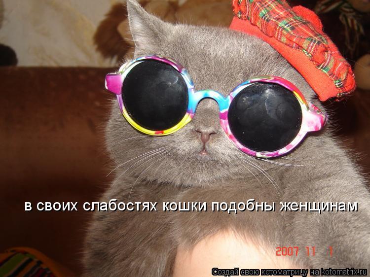 Котоматрица: в своих слабостях кошки подобны женщинам
