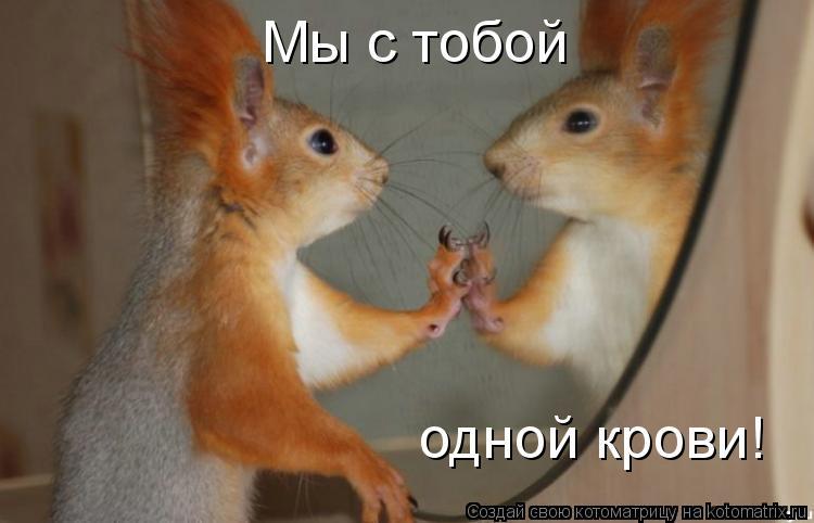 Котоматрица: Мы с тобой одной крови!