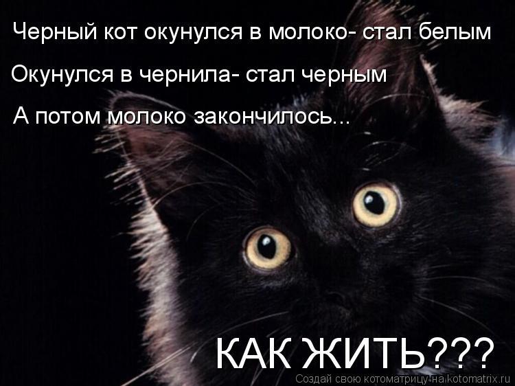 Котоматрица: Черный кот окунулся в молоко- стал белым Окунулся в чернила- стал черным А потом молоко закончилось... КАК ЖИТЬ???